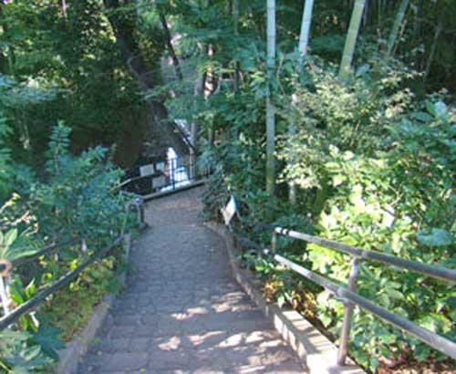 渓谷への階段